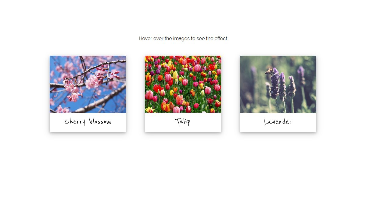 Demo image: Picture Cards - Figure & Figcaption